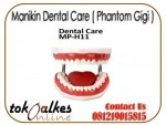 Manikin Dental Care ( Phantom Gigi )